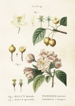 Poster Äppel 50 * 70 cm