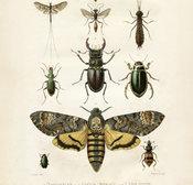 Poster Insekter 50 * 70 cm